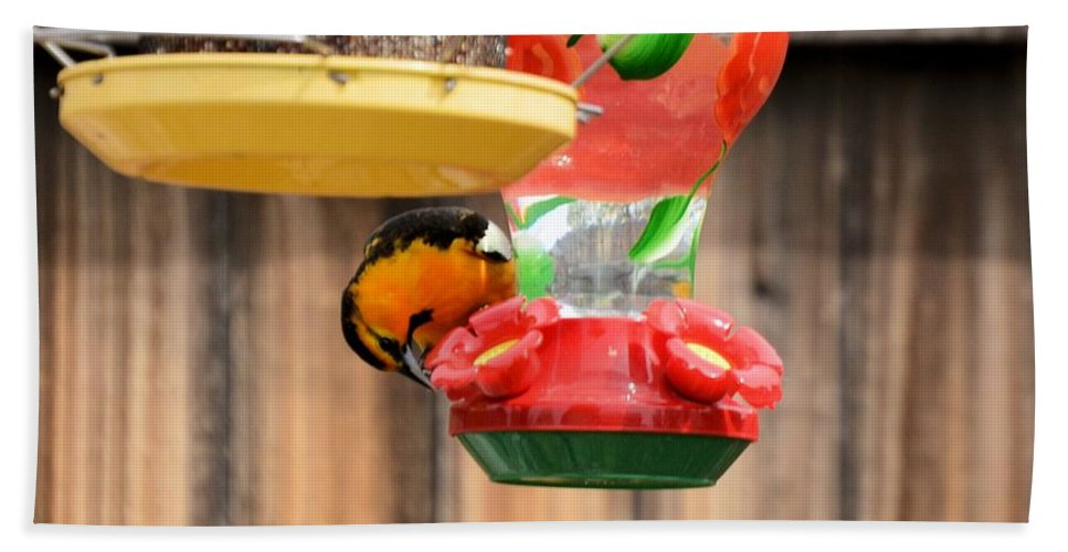 Bird Hand Towel featuring the photograph Oriole N Nectar by Wendy Fox