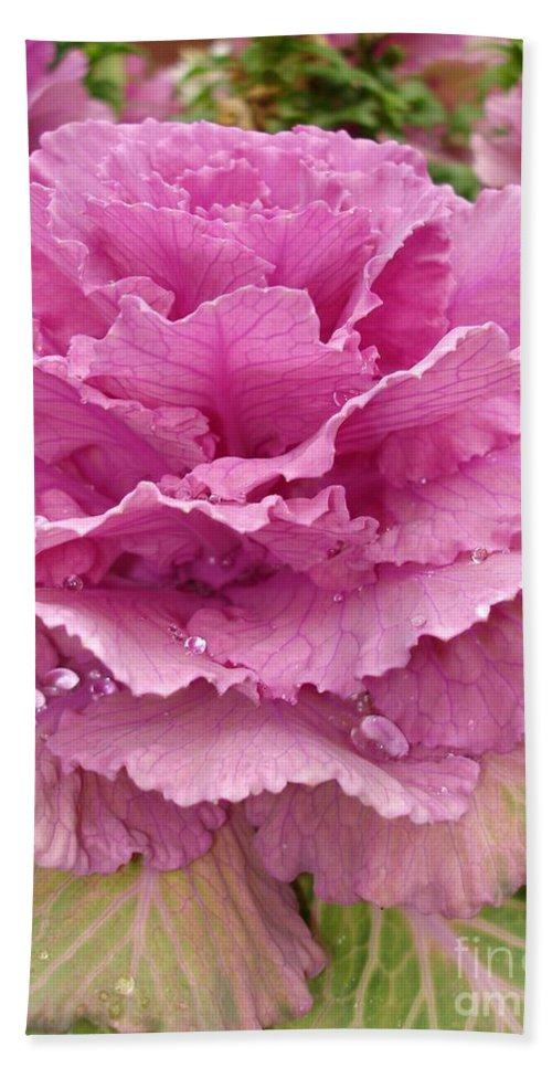Ornamental Cabbage Hand Towel featuring the photograph Ornamental Cabbage by Carol Groenen