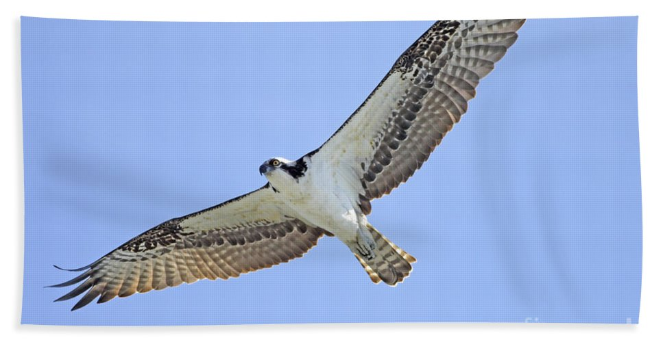 Osprey Hand Towel featuring the photograph Osprey 1-30-11 by Deborah Benoit
