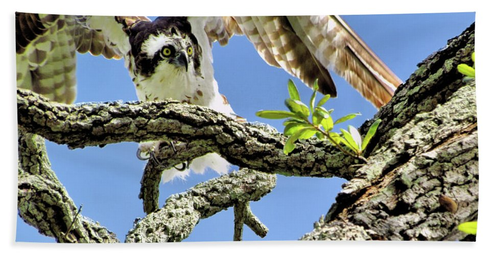 Animals Hand Towel featuring the photograph Osprey 4 by John Trommer