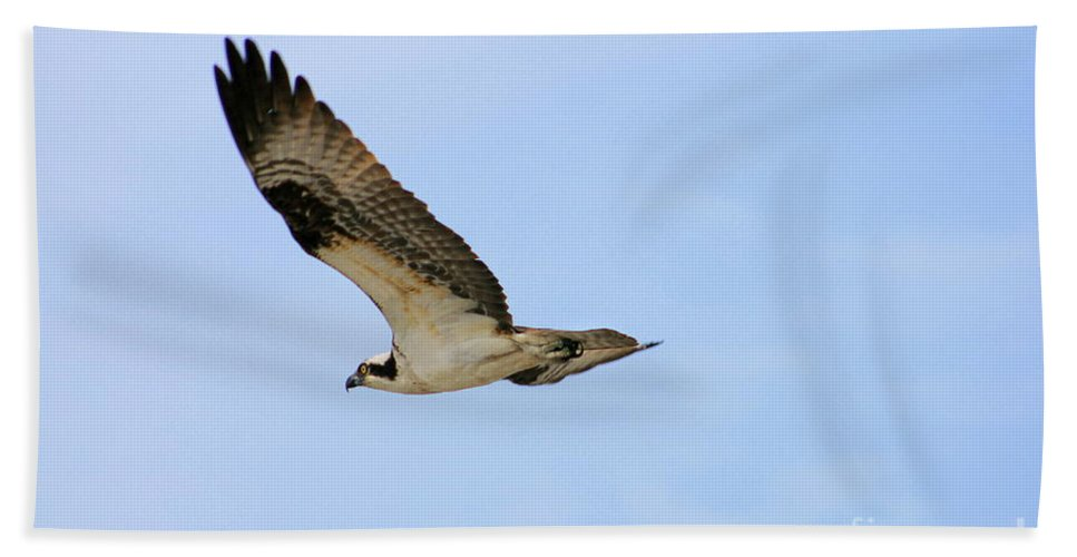 Hand Towel featuring the photograph Osprey by Angela Rath