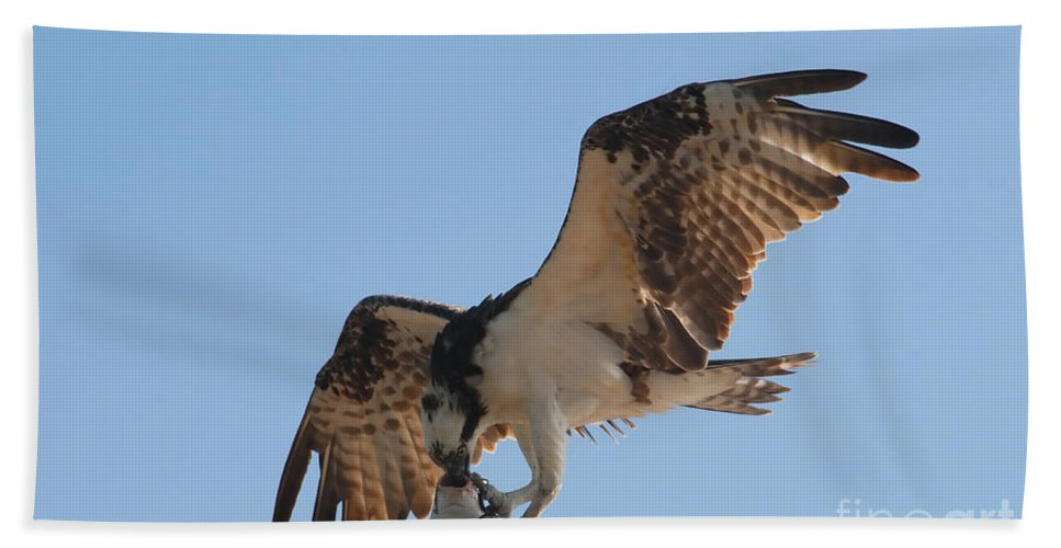 Osprey Bath Sheet featuring the photograph Osprey by David Lee Thompson