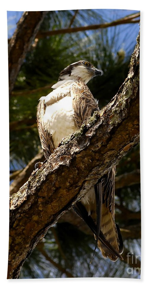 Osprey Bath Sheet featuring the photograph Osprey Hunting by David Lee Thompson