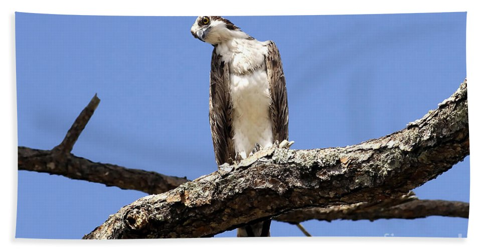 Osprey Bath Sheet featuring the photograph Osprey In The Trees by David Lee Thompson