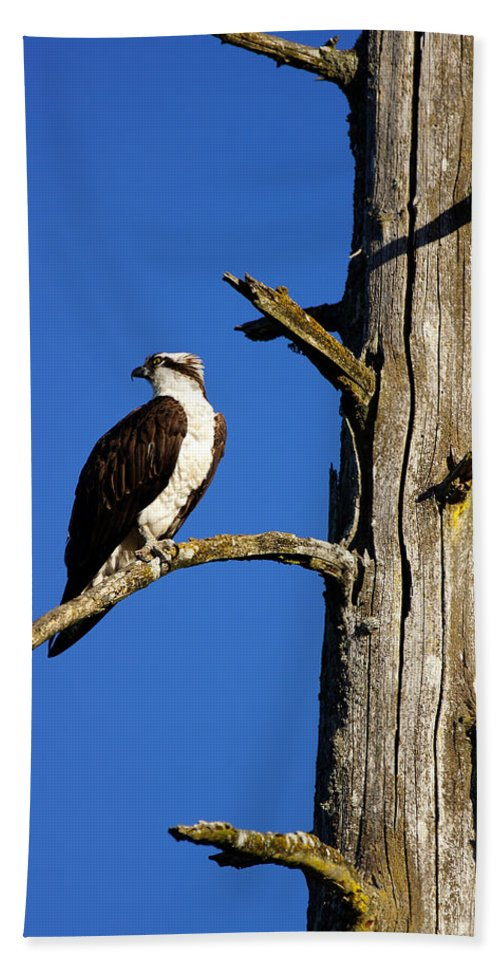 Osprey Bath Sheet featuring the photograph Osprey Nest Guard - 001 by Shirley Heyn
