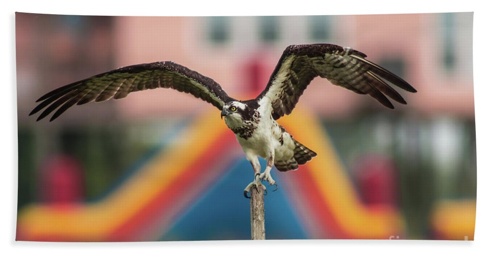 Wildlife Hand Towel featuring the photograph Osprey Salutes The Busch Eagle by Robert Frederick