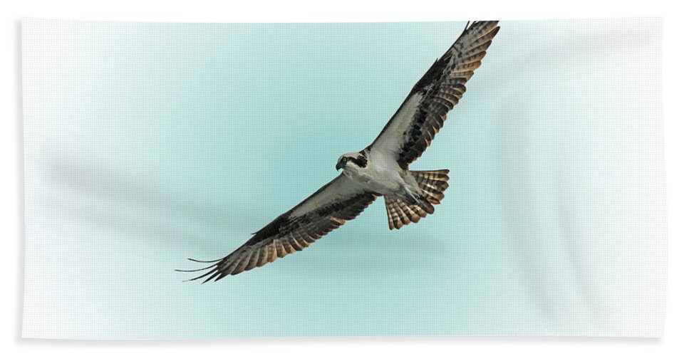 Bird Hand Towel featuring the photograph Osprey Soar 2 by Deborah Benoit