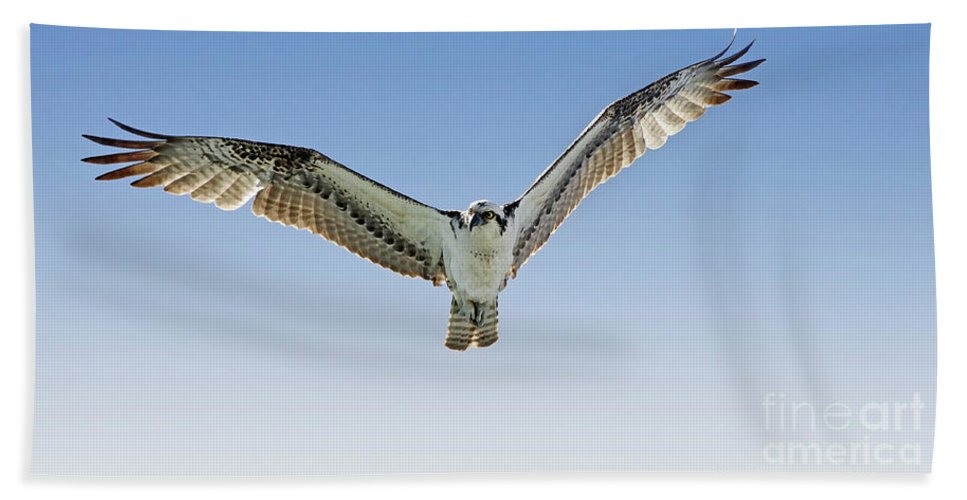 Osprey Hand Towel featuring the photograph Osprey Soar Search by Deborah Benoit