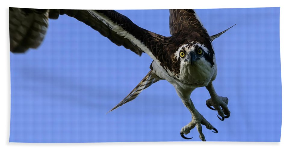 Accipitridae Hand Towel featuring the photograph Osprey Takeoff by Steve Samples