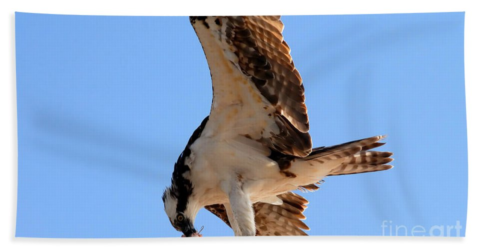 Osprey Bath Sheet featuring the photograph Osprey's Catch by David Lee Thompson