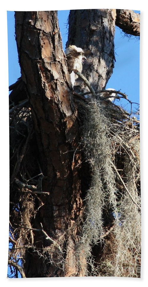Osprey Nest Hand Towel featuring the photograph Ospreys In Spanish Moss Nest by Carol Groenen