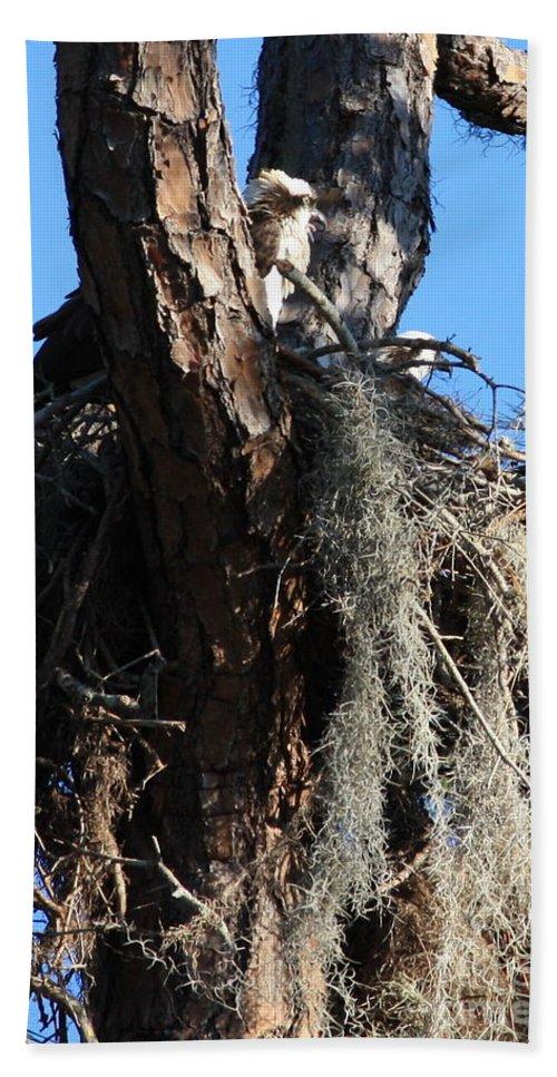 Osprey Nest Bath Sheet featuring the photograph Ospreys In Spanish Moss Nest by Carol Groenen