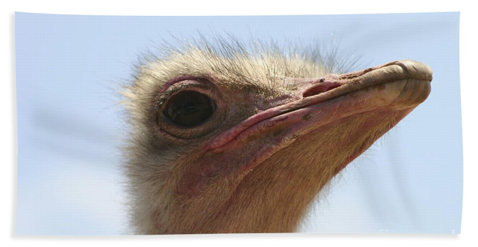 Ostrich Hand Towel featuring the photograph Ostrich Head Close Up by Danny Yanai