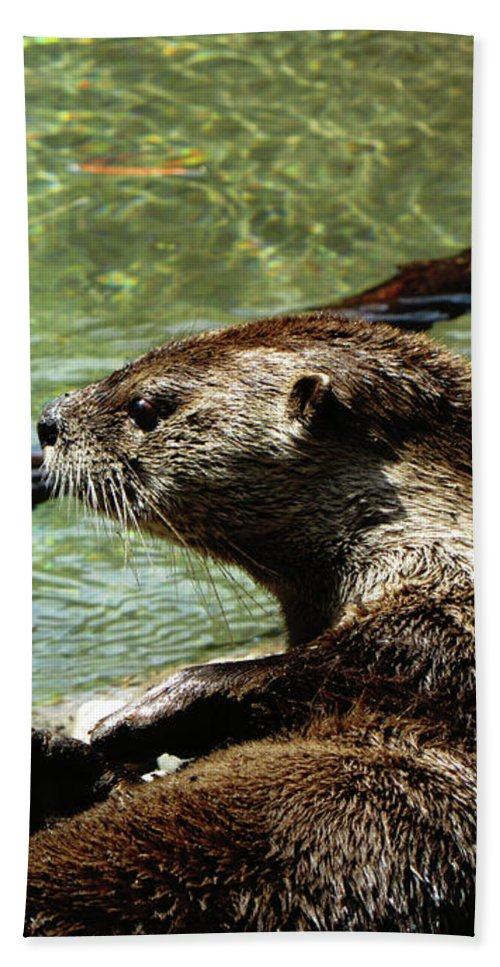 Otter Hand Towel featuring the photograph Otter by September Stone