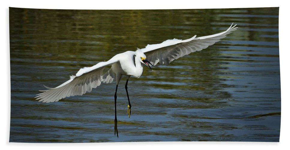 Snowy Egret Bath Sheet featuring the photograph Out Of My Way by Saija Lehtonen