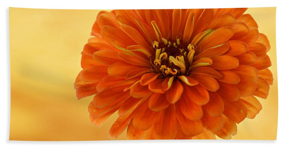 Flower Bath Sheet featuring the photograph Outrageous Orange by Sandy Keeton