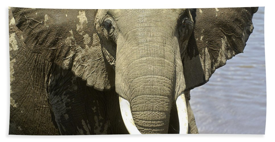Africa Hand Towel featuring the photograph Outta My Way by Michele Burgess