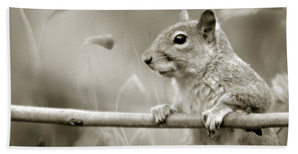 Squirrel Hand Towel featuring the photograph Over The Fence In Black And White by Angel Ciesniarska
