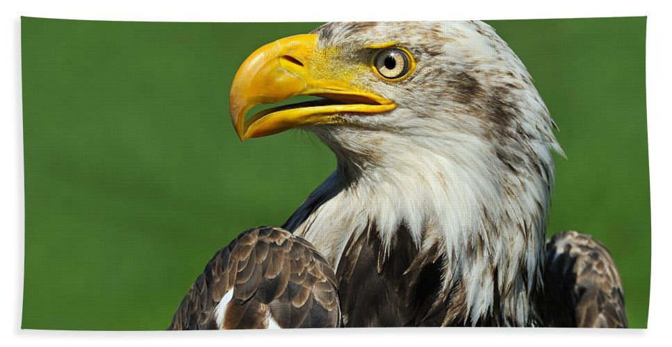 Bald Eagle Bath Sheet featuring the photograph Over The Shoulder by Tony Beck