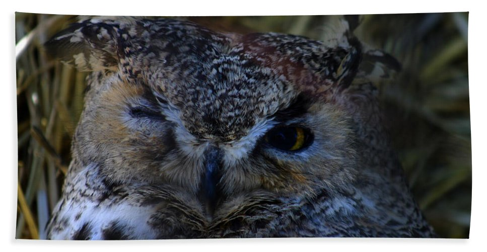 Owl Hand Towel featuring the photograph Owl by Anthony Jones