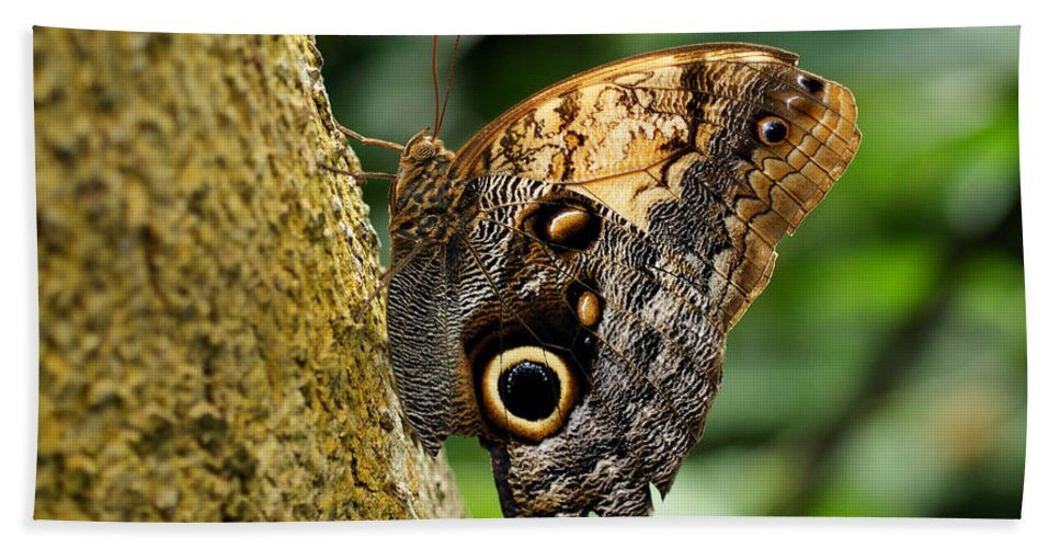 Butterfly Hand Towel featuring the photograph Owl Butterfly by Sandy Keeton