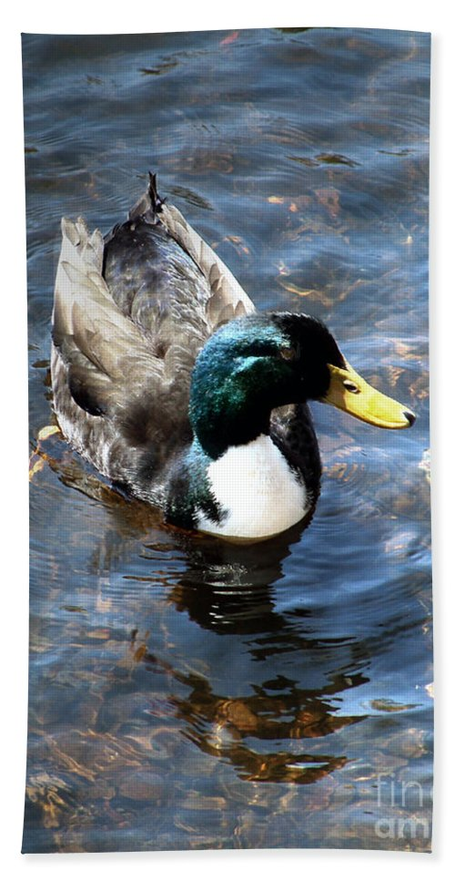 Drake Hand Towel featuring the photograph Paddling Peacefully by RC DeWinter