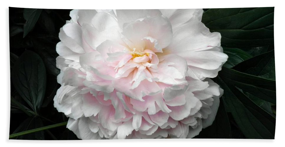 Peony Bath Sheet featuring the photograph Paeon by T Cook