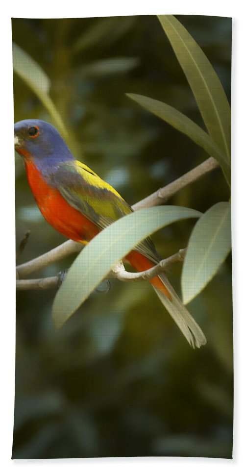 Painted Bunting Bath Sheet featuring the photograph Painted Bunting Male by Phill Doherty