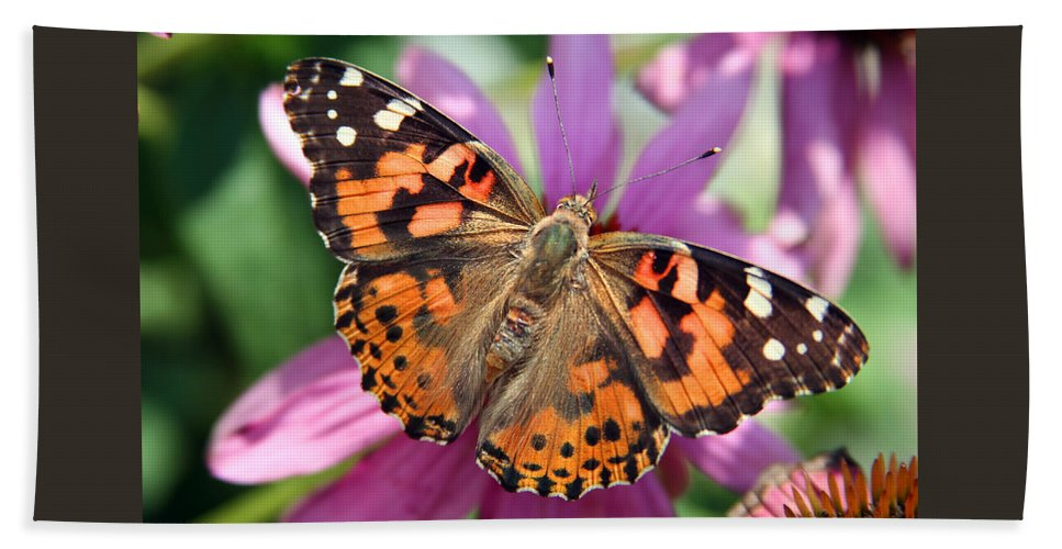 Painted Lady Bath Towel featuring the photograph Painted Lady Butterfly by Margie Wildblood