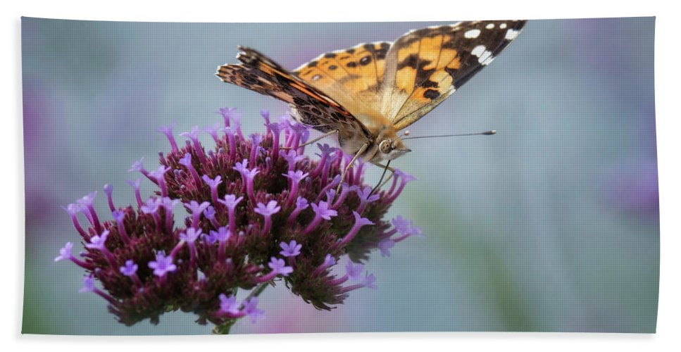 Butterfly Hand Towel featuring the photograph Painted Lady by Claudia Kuhn