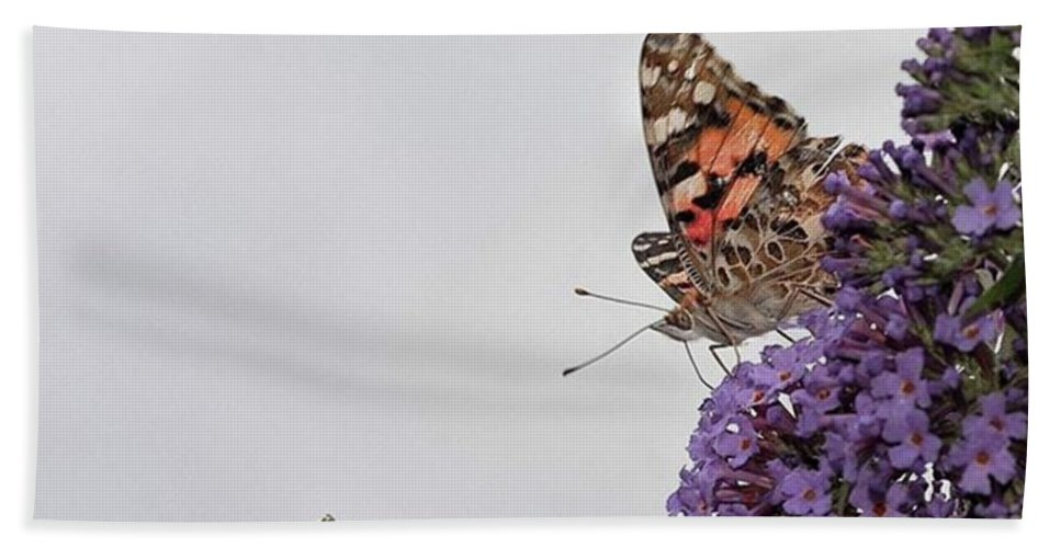 Insectsofinstagram Bath Towel featuring the photograph Painted Lady (vanessa Cardui) by John Edwards