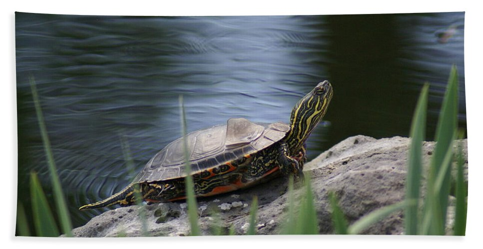 Spokane Hand Towel featuring the photograph Painted Turtle by Ben Upham III