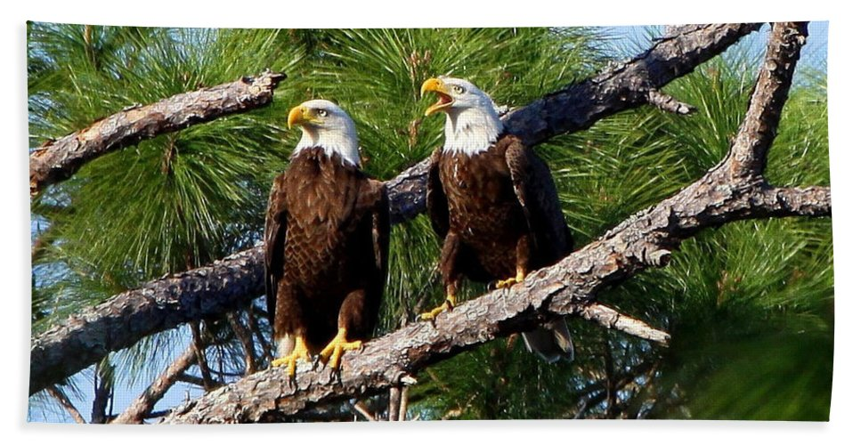 American Bald Eagle Bath Sheet featuring the photograph Pair Of American Bald Eagle by Barbara Bowen