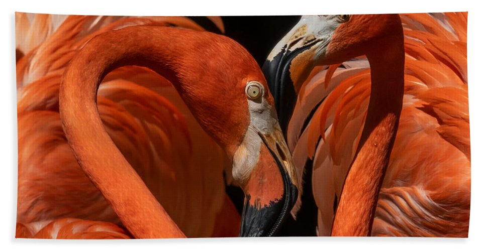 Pair Of Flamingos Hand Towel featuring the photograph Pair Of Flamingos by Elizabeth Waitinas