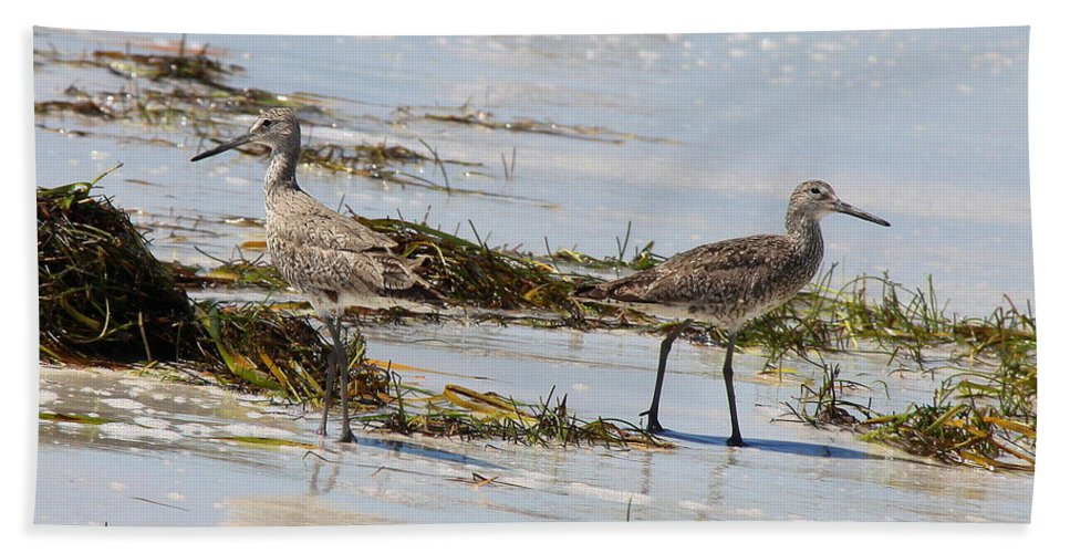 Willets Hand Towel featuring the photograph Pair Of Willets by Barbara Bowen