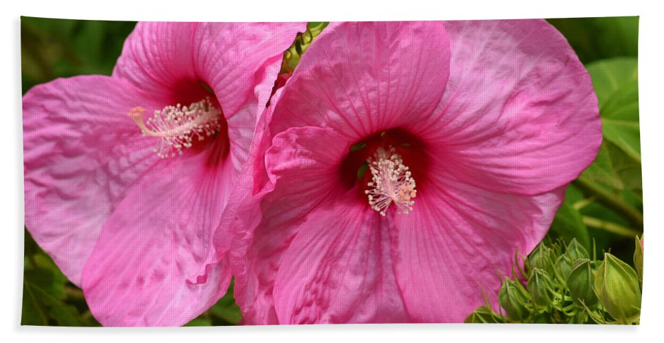 Flowers Bath Sheet featuring the photograph Paired In Pink by Maria Keady