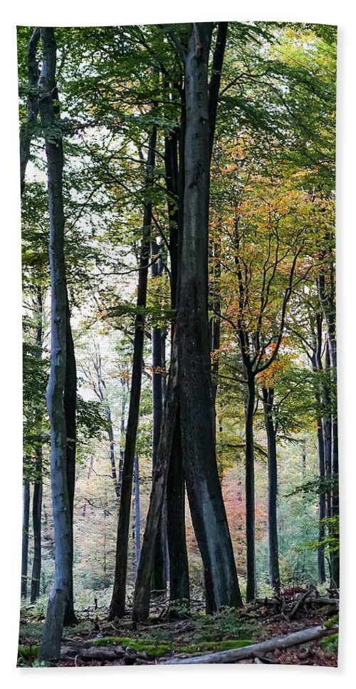 Palatine Bath Sheet featuring the photograph Palatine Forest by Stephen Settles