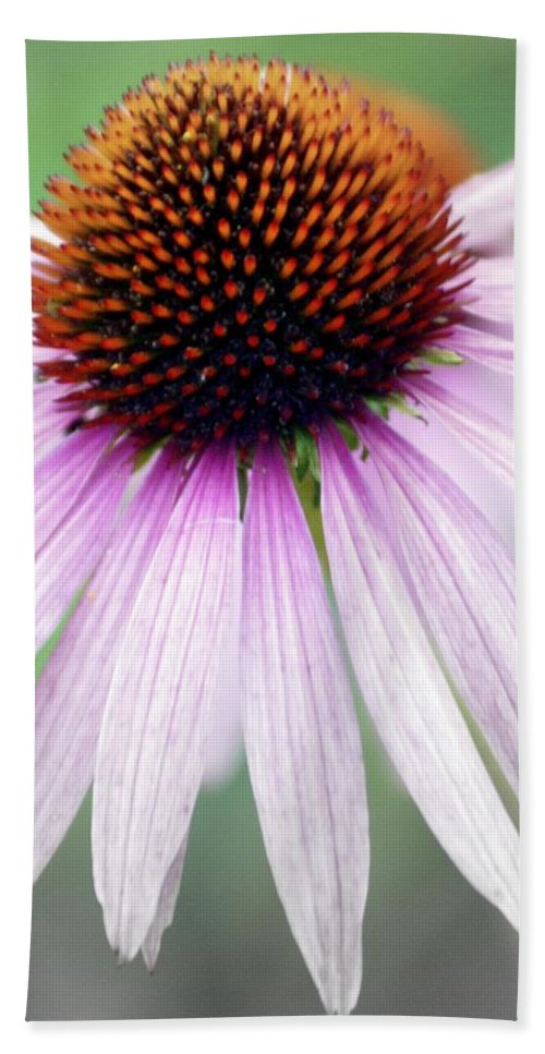 Flowers Bath Towel featuring the photograph Pale Grey by Marty Koch