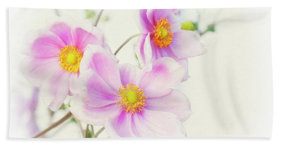 Pink Hand Towel featuring the photograph Pale Pink Anemone by Jim And Emily Bush