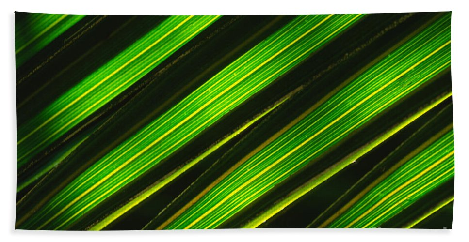 Macro Hand Towel featuring the photograph Palm Frond Abstract by Sandra Bronstein