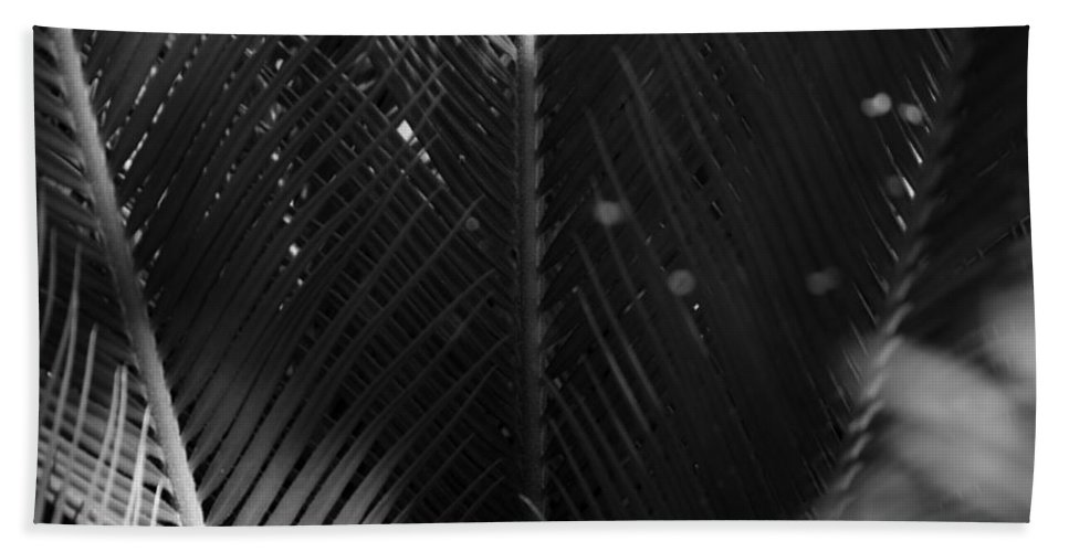 Looking Through The Middle Of A Large Palm Bath Sheet featuring the photograph Palm Fronds by Kathy Kirkland