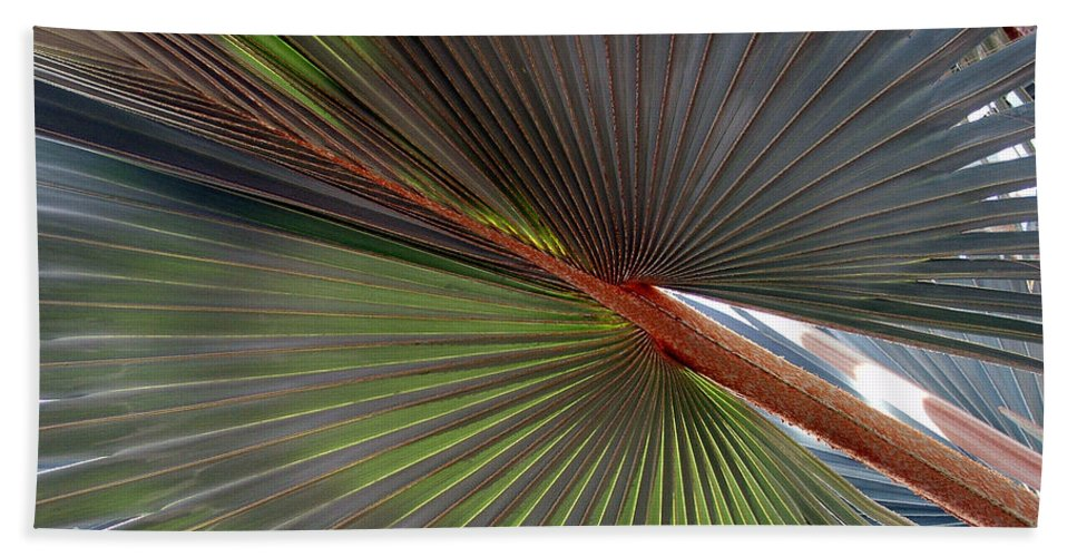 Tree Bath Towel featuring the photograph Palm by Robert Meanor