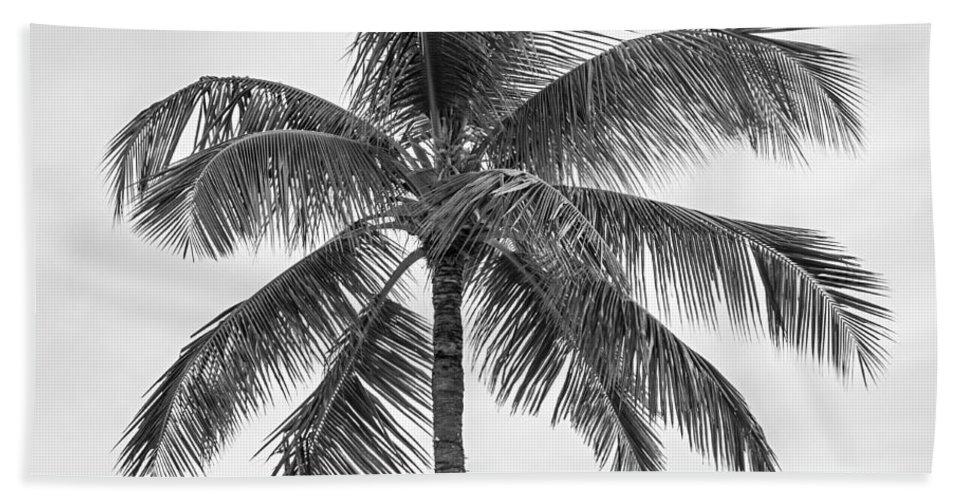 Palm Bath Towel featuring the photograph Palm Tree by Elena Elisseeva