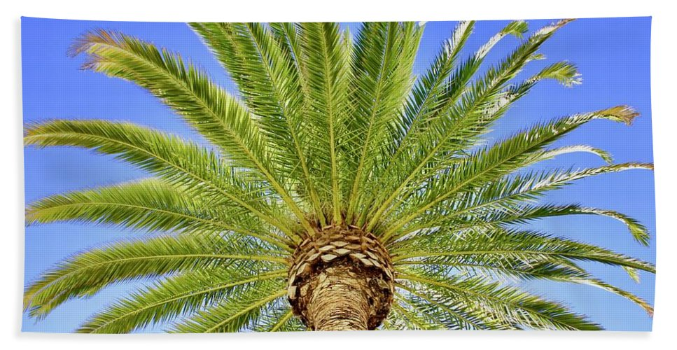 Nature Bath Sheet featuring the photograph Palm Tree by Lorna Maza