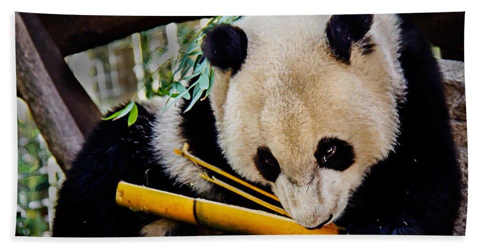 Animals Bath Sheet featuring the photograph Panda Bear by Robert Bales