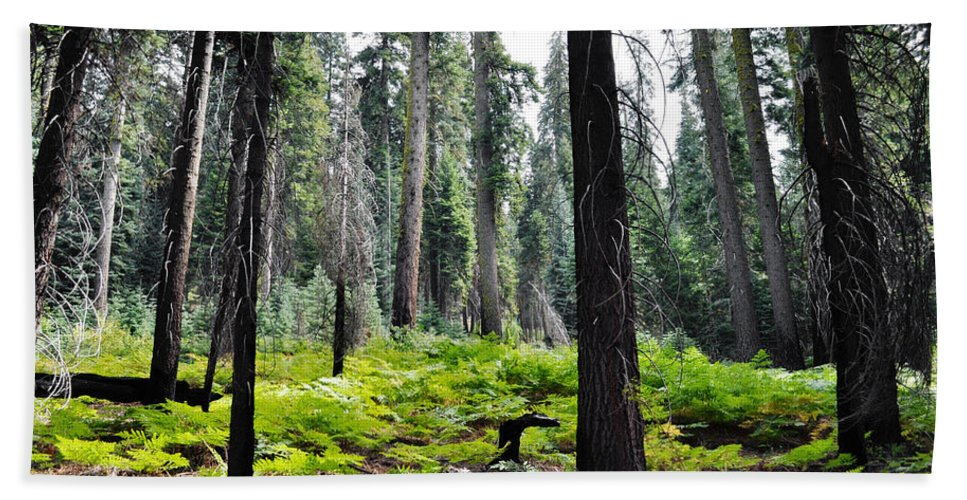 Sequoia National Park Bath Sheet featuring the photograph Panoramic Forest by Kyle Hanson