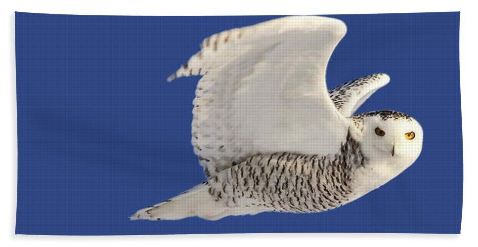 Hand Towel featuring the digital art Panoramic Prairie Snowy Owl by Mark Duffy