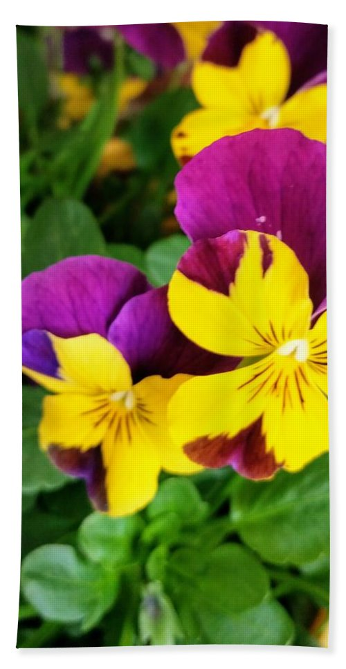 Pansies Bath Sheet featuring the photograph Pansies 2 by Valerie Josi