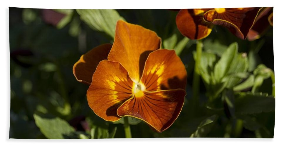 Pansy Bath Sheet featuring the photograph Pansies by Sara Stevenson