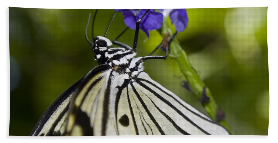 Paper Kite Butterfly Hand Towel featuring the photograph Paper Kite Butterfly by Heather Applegate